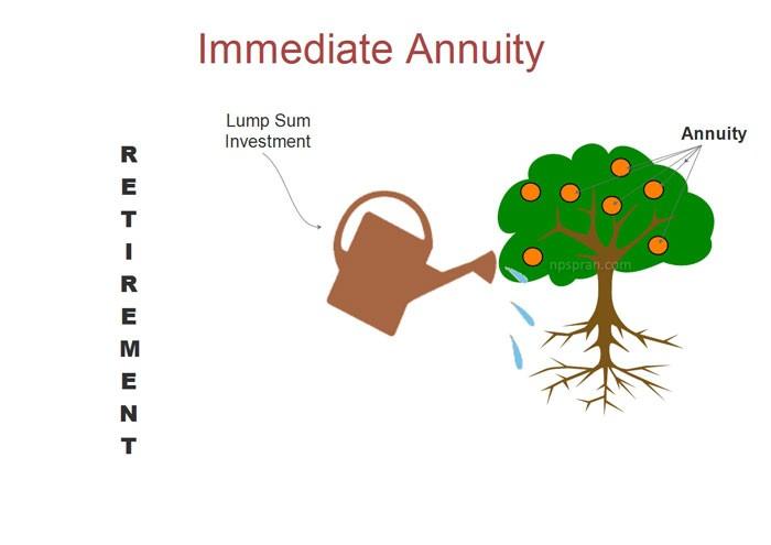 What Is an Immediate Annuity?
